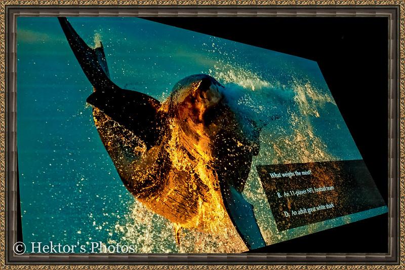 acquarium-25.jpg