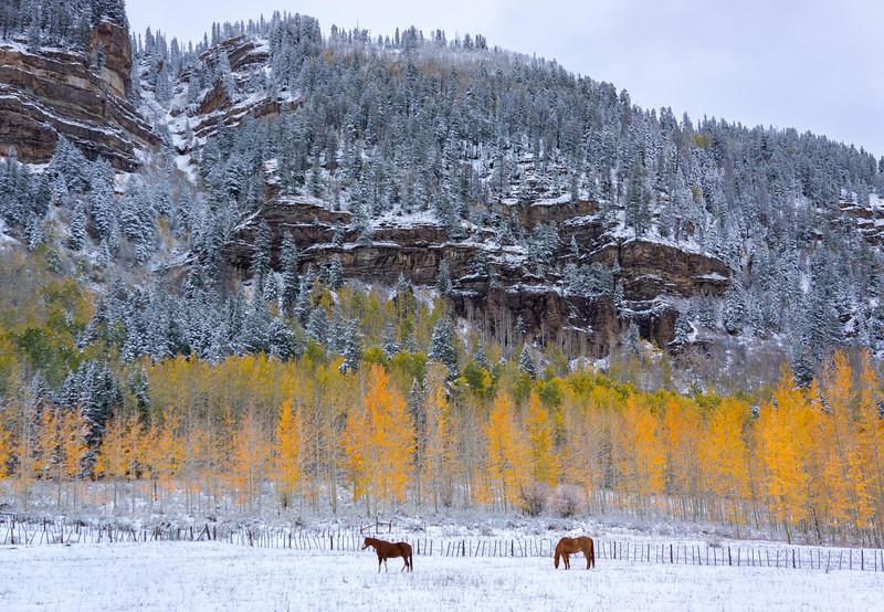 Fall_Horses.jpg