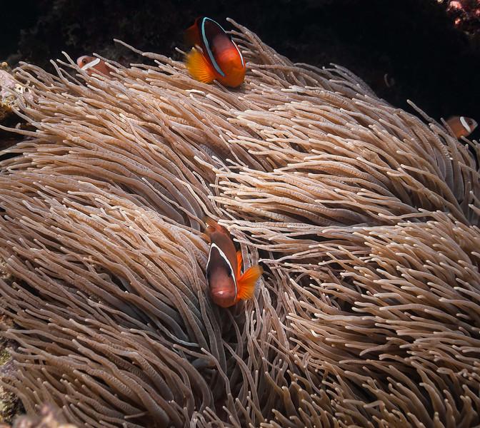 Nemo family.jpg