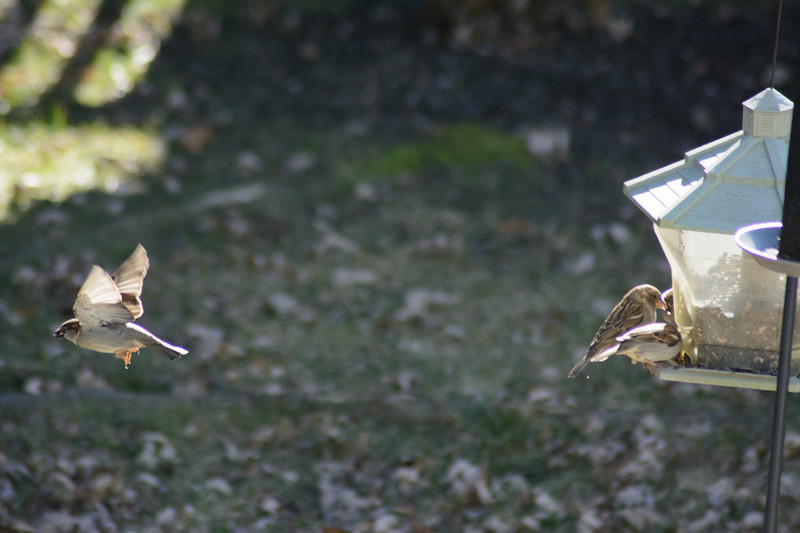 Birds flying-017
