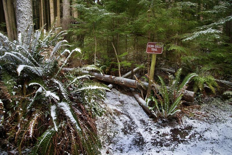 DSC_1081 Fern trail snow 1.14.20.jpg
