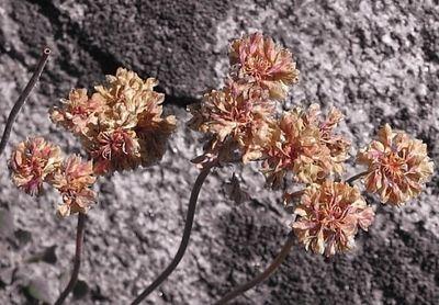 graniteflower2.jpg