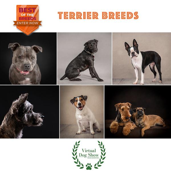 FB-Terrier-Collage 1.jpg