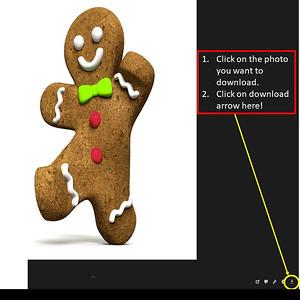 Ginger Bread Photos