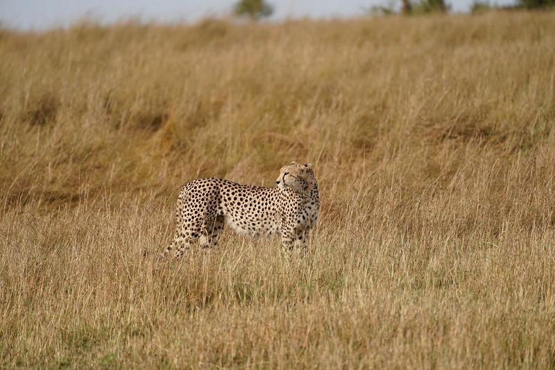 safari-2018-69.jpg