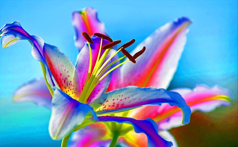 J139_Nedohin_YEContemporary_Colour3_LALily.jpg