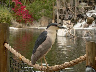 San Diego Wild Animal Park 4-2005