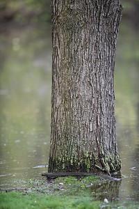 Tree Underwater