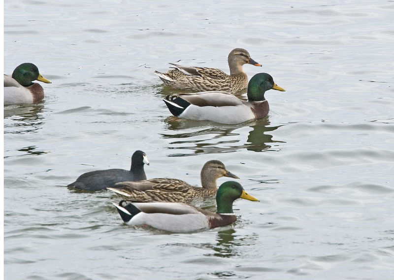 Duck group copy.jpg