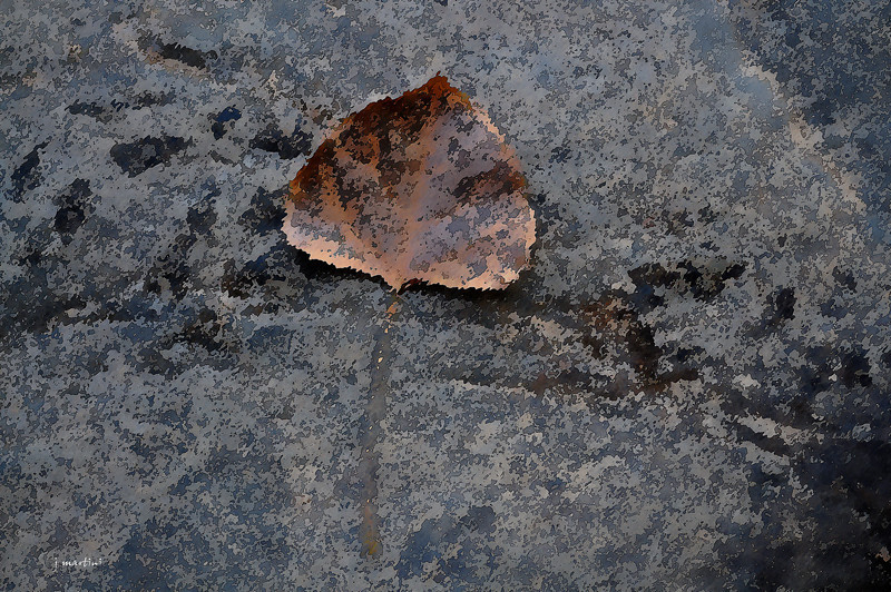fosil 4-20-2011.jpg