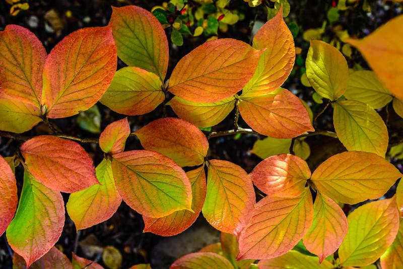 Oct_Leaves-23.jpg