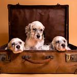 Dogs main page photos