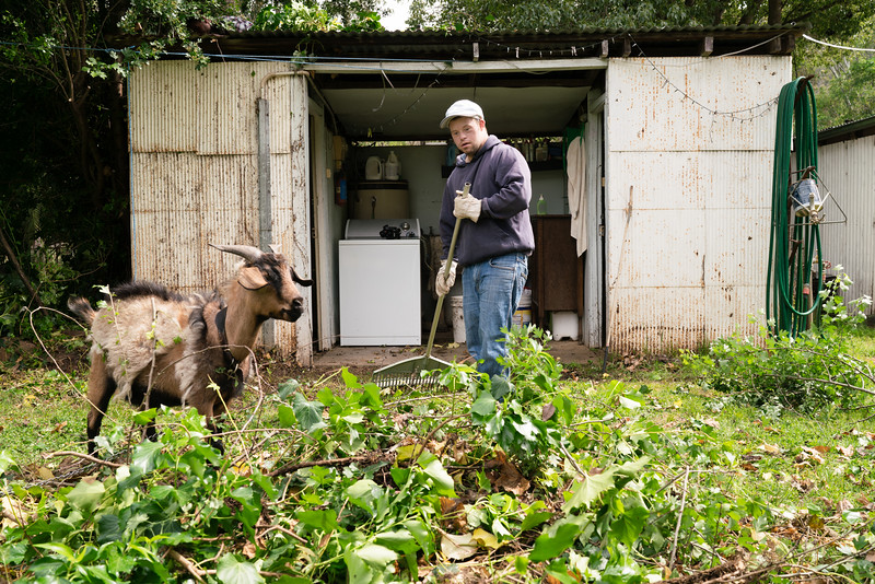Man Raking with a Goat nearby