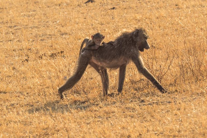 Tanzania_Safari-best-101.jpg