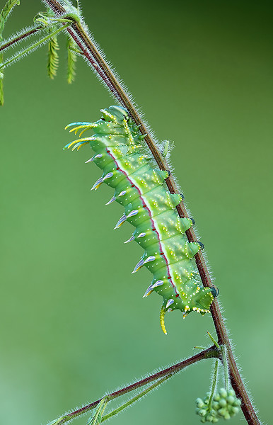 question caterpillar email size.JPG