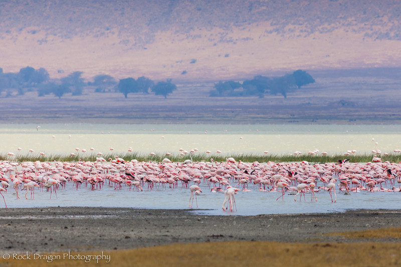 Ngorongoro-76.jpg