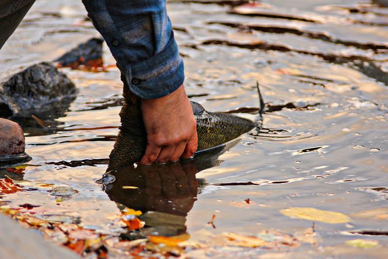Salmon River 365.jpg