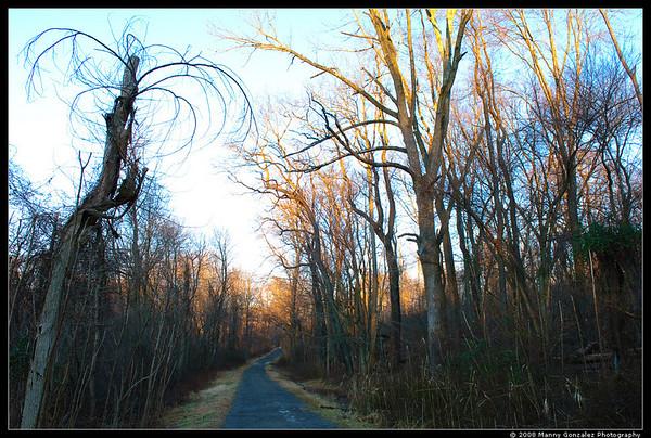 Rockefeller State Park December 2008