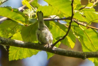 What Warbler