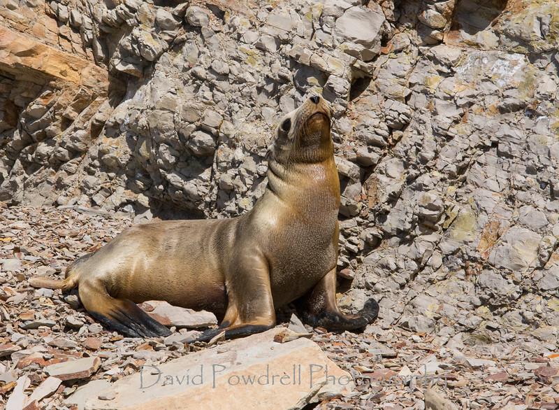 1 Sea Lion_1.jpg
