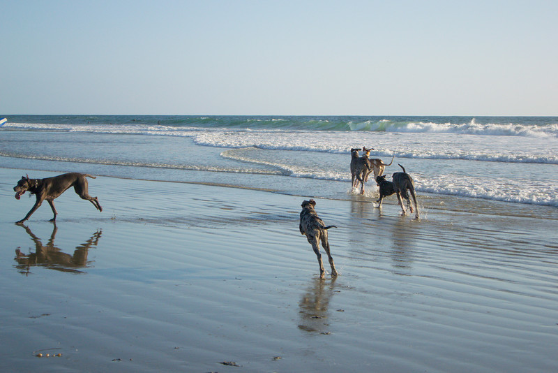 dogs_beach-21.jpg