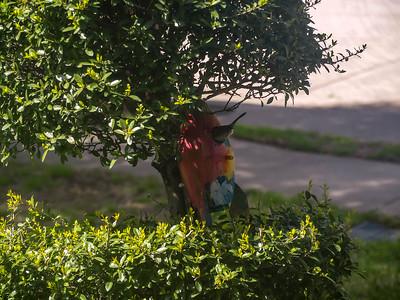 2019-03-31 - Birdhouse Resident
