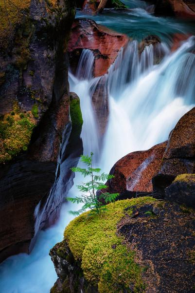 Little Tree of Avalance Creek.jpg