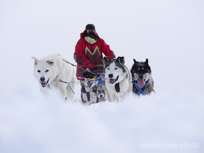 Arctic Dogsled Expedition