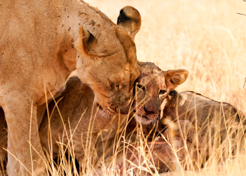 safari-2018-45.jpg