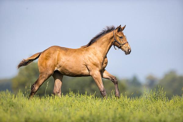 Catholic Boy Foals - August '21