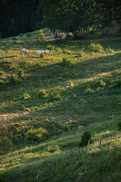 Horses - Scalucchia, Ramiseto, Italy - July 15, 2018