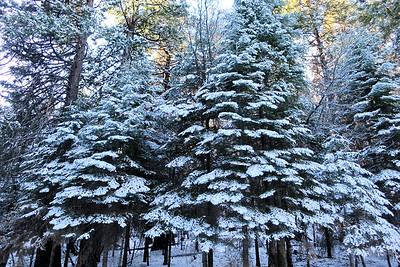 2017-12 Sierra National Forest