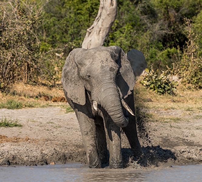 Botswana_June_2017 (4800 of 6179).jpg
