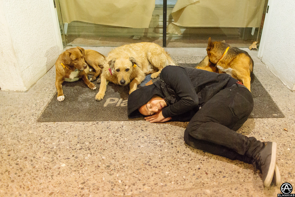Taking a sleep with Alex's pups