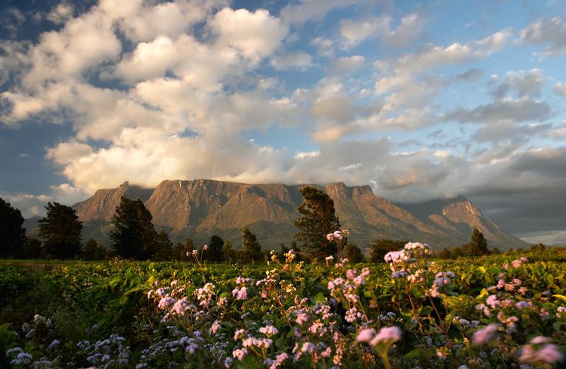 Mulanje - Mulanje Mountain - 3142.jpg