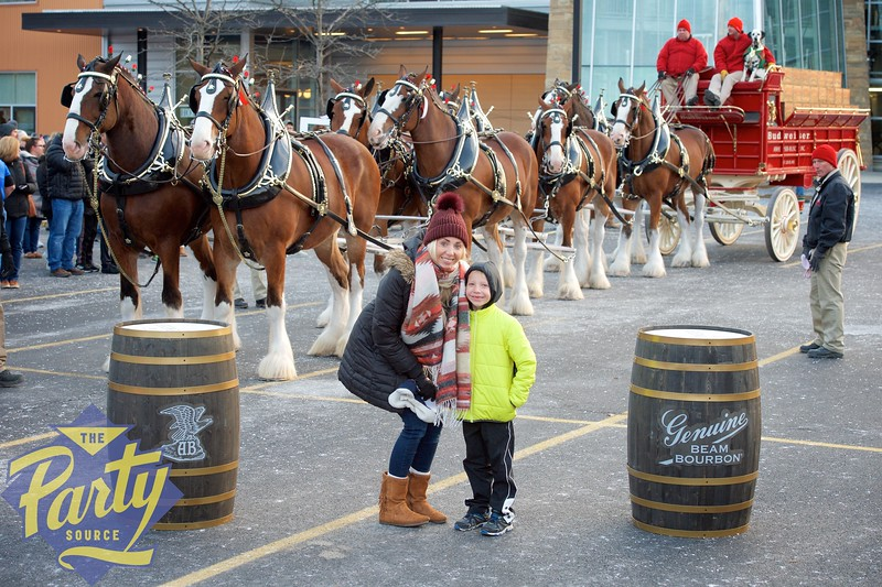 Clydesdale Portraits 280.jpg