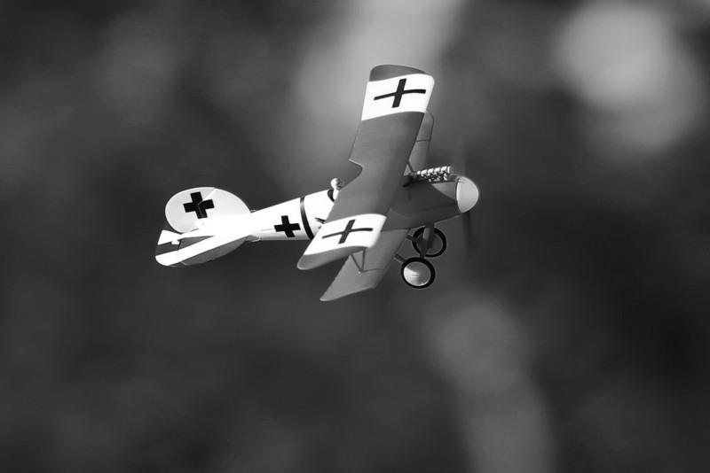 FZ_AlbatrosDV_25.jpg