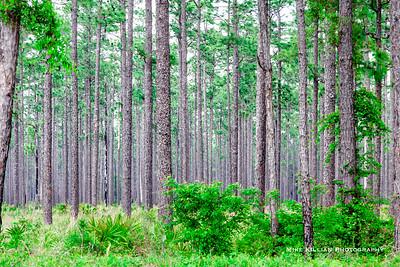 2020 Florida Nature
