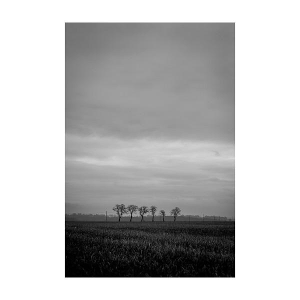 88_Trees_10x10.jpg