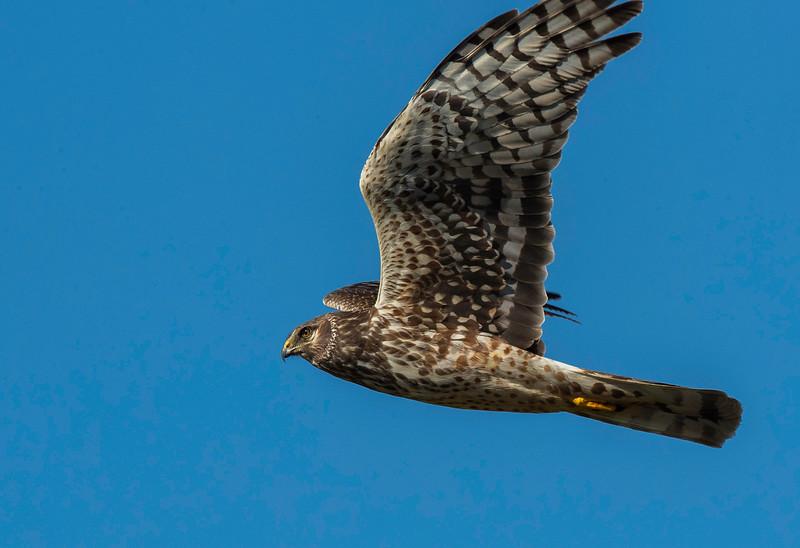 HNBH Birds1-2.jpg