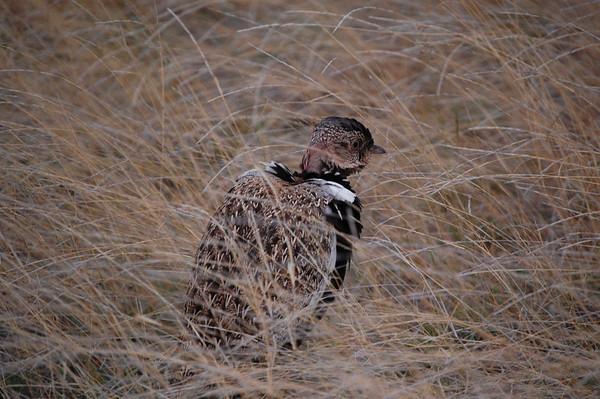 Kruger Birds