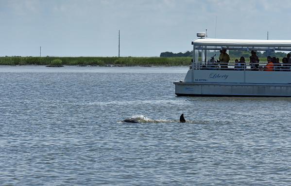 Jekyll Island Boat Tours - Jekyll Wharf - Dolphin 06-18-20