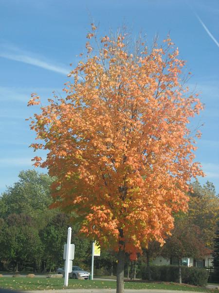 Fall pics 2008 010.jpg