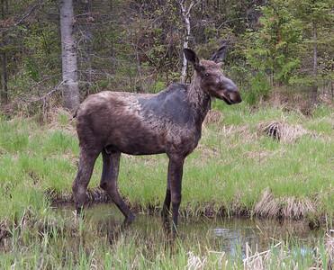 iroquois falls 2016