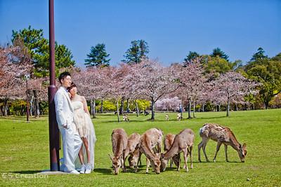 Japan Pre Wedding