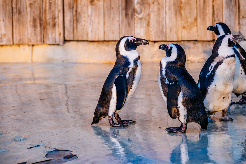 Tonis Zoo-0476.jpg
