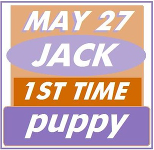 27 MAY (JACK new puppy)