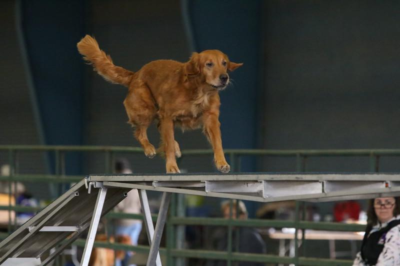 3-10-2019 Bloodhound-0269.jpg