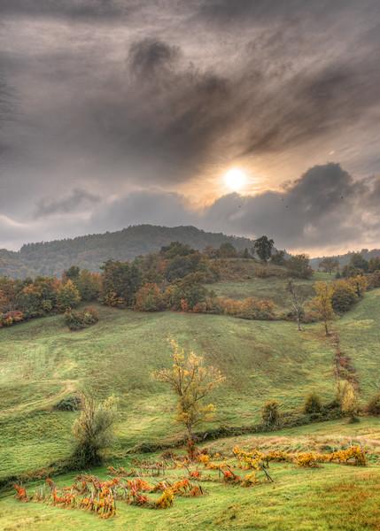 Vineyard - Casina, Reggio Emilia, Italy - October 24, 2020