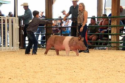 Market Swine 7